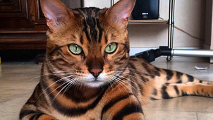 1c6500c3ed17 Eπιδημία έχει εξολοθρεύσει τις μισές γάτες στη Θεσσαλονίκη - Τι να ...